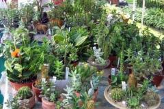 Van Arnum Greenhouses